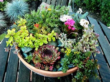 Daretodream Monday Mornhow To Make A Tabletop Succulent Garden